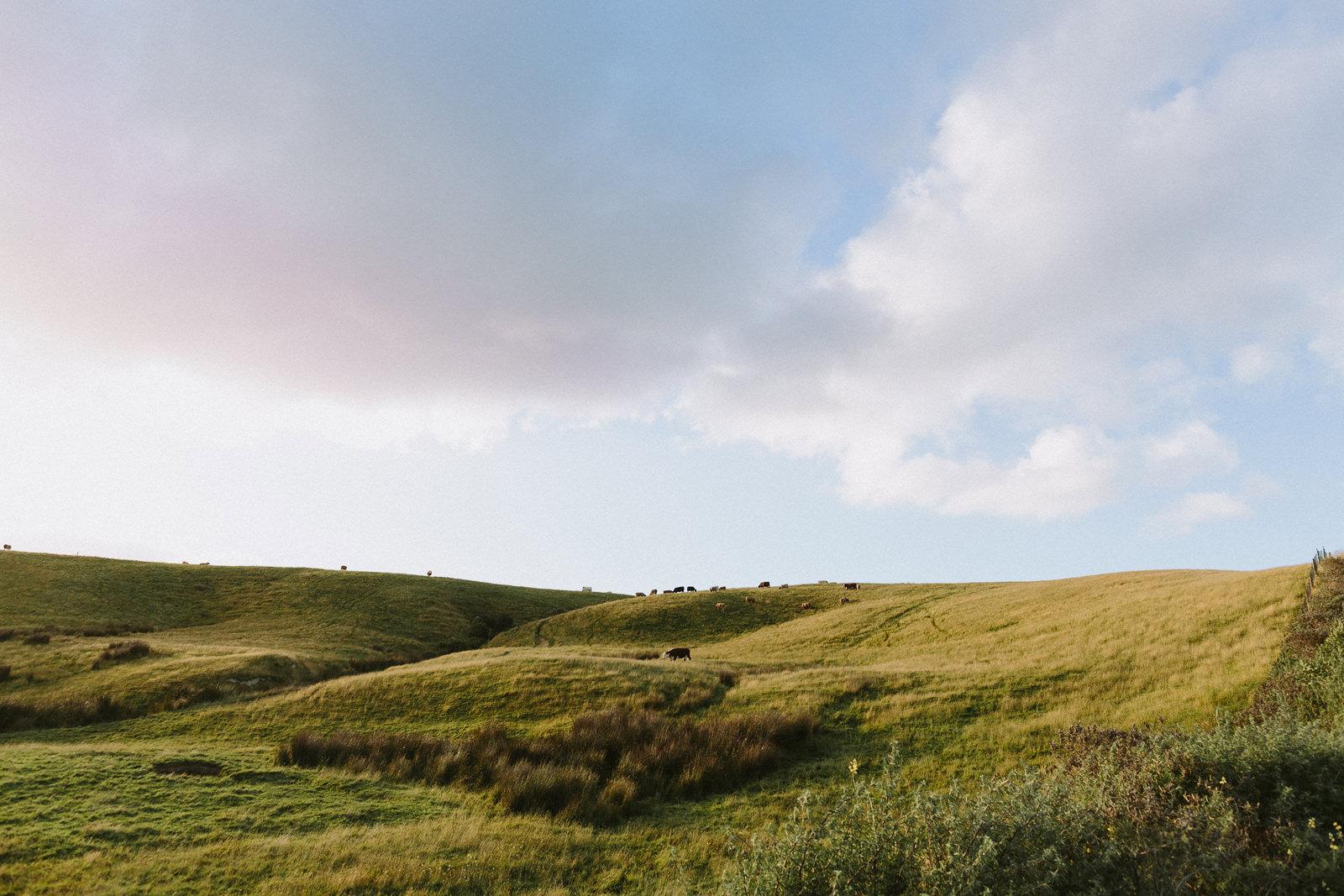 beautiful landscape new zealand